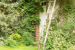 But where is the door ? Le Perche, Normandie, France (martine_vise) Tags: leperche france normandie door ladder greenery garden beautifulgarden trellis englishstyle gardenclutter englishgarden shrub rosebush abundance abundanceofgreenery beautifulplace wall coveredwithgreenery outside