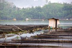 lake sebu (alanebs) Tags: lake south philippines tribe mindanao sebu cotabato tboli