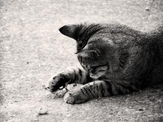 Es juego de gatos [EXPLORE]