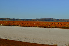 Salt Pan (johnny5series) Tags: contrast salt westernaustralia redearth saltpan dampier