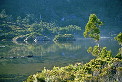 Around the Shores of Ooze Lake, Southern Range, SW Tasmania, 16th January, 1973. (garratt3) Tags: lake film pentax takumar unescoworldheritagesite bushwalking tasmania kodachrome wilderness tasmanian southcoasttrack tasmanianwilderness southwestnationalpark southernrange lunerange