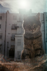 Smena 8M + Holga CLS lens (Daniel Cane) Tags: uk england pet cats pets sun colour building sunshine animal animals architecture cat 35mm buildings hair lens fur sussex lomo feline brighton exposure unitedkingdom doubleexposure hove garage tabby double iso negative 35mmfilm soviet lensflare flare vista 100 analogue agfa expired russian 8m eastsussex smena ussr smena8m expiredfilm garages tabbycat cmeha colournegative 100iso c41 brightonandhove agfaphoto agfaphotovista100 agfaphotovista keepingacameratohand 2yearsexpired