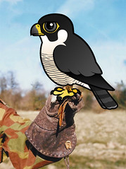 Birdorable Peregrine Falcon on the glove (birdorable) Tags: cute bird education falcon falconry peregrine birdorable