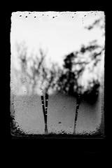 Hiding in the mists of precipitation (Tim Kirman Photography) Tags: trees blackandwhite bw white abstract black tree window landscape blackwhite experimental dof experiment condensation conceptual tones tone windowpane tonal timkirmanphotography timkirman