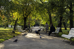 (Michael Laudij) Tags: park autumn sunset fall garden prague peacock vojanovysady michaellaudij