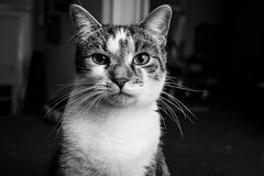 Tucker (Photofidelity) Tags: portrait blackandwhite cute face cat kitten feline random expression kitty olympus meow tucker meghanherald olympusomdem5