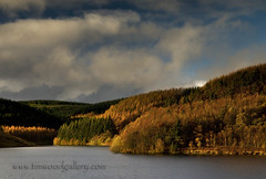 LLYN BRIANNE RESERVOIR, AUTUMN COLOURS. (IMAGES OF WALES.... (TIMWOOD)) Tags: wood autumn trees lake storm fall rain pine wales clouds forest reflections countryside tim woods gallery colours sony cymru www stormy reservoir pines valley com elan alpha mid thunder autumnal brianne llyn a700