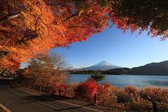 autumn leaves Mt.fuji (joytrip*) Tags: lake tree japan canon colorful autumnleaves 日本 紅葉 木 富士山 mtfuji yamanashi 湖 河口湖 山梨 kawaguchilake eos7d sigma816mmf4556