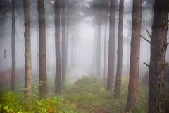 Basoa (Jabi Artaraz) Tags: naturaleza mist nature sony natura bosque vida zb pinos niebla bruma basoa lainoa pinuak bizia euskoflickr superaplus aplusphoto allxpressus jartaraz alfa350 bestcapturesaoi