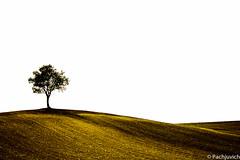 Terre en or (pachjuvich) Tags: rural jaune couleurs terre campagne lignes ocre courbes formes minimalisme pachjuvich patrickbastide