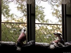 06:00 AM (She Run Away) Tags: morning portrait dog home dogs window sunrise canon photography 50mm dawn am quiet natural bokeh earlymorning peaceful naturallight sofa serene canon50mmf18 f18 18 canon50mm dogportrait windowbars 0600 canonphotography canon550d canont2i canonrebelt2i