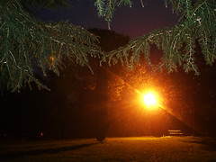 CIMG1625 (pinktigger) Tags: trees light italy night bench italia alone branches hill lonely lamplight solitary friuli fagagna feagne