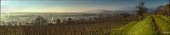 Matin d'automne sur Molsheim (Patrick d'Alsace) Tags: panorama pano patrick alsace lumiere paysage vignes vosges leverdesoleil panoramique molsheim zaugg rgionalsace patrickzaugg