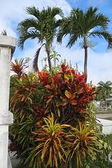 Key West (Florida) November 2012 2279b 4x6 (edgarandron - Busy!) Tags: cemeteries cemetery keys florida keywest floridakeys keywestcemetery