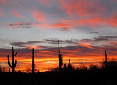 Sky Ablaze (zoniedude1) Tags: sunset arizona cactus sky southwest nature colors beauty silhouette clouds skyscape outdoors visions evening solitude peace desert sundown az adventure explore saguaro exploration discovery sonorandesert skyshow colorexplosion lookingwest saguarocactus maricopacounty carnegieagigantea azwsunset skyablaze zoniedude1 hieroglyphicmountains canonpowershotg11 earthnaturelife