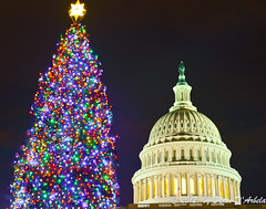 The Capitol and the Tree (Crested Aperture Photography) Tags: xmas architecture america us dc districtofcolumbia arch unitedstates noel dome nationalmall brightlights nationaltreasure d800 nationalsymbol nationscapitol americaamerica nationaltree nikond800 nikon2470mmlens
