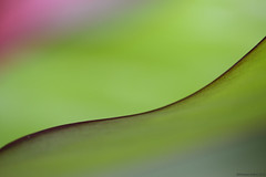 Rang! (Ramesh Adkoli) Tags: abstract closeup jayanagar capturenx d800e