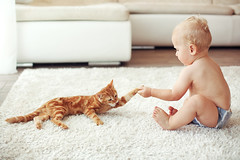 Toddler playing with red cat on a white carpet at home (DriveTrafficMedia) Tags: 1 activity adorable animal baby beautiful boy carpet casual cat caucasian cheerful child childhood cute cutecat diaper domestic european feelings floor fun ginger happy home house human indoors interior kid kidsroom kitten leisure life lifestyle little old pet playful playing positive redcarpet room smiling still toddler toddlersplaying year