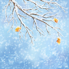 Winter vector snow-covered frost branch background (lisame0511) Tags: winter background snowcover frost tree brunches autumn leaves snowfall blue bokeh backdrop snowy weather vector design christmas landscape greeting card snowstorm fall ice blizzard white holiday wallpaper cold nature season illustration xmas outdoor sky day newyear modern style contemporary postcard merry happy rural snowflakes idyllic scene mist frozen december freeze