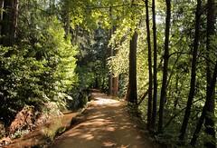 Banner Cascade NID trail (qorp38) Tags: trail trees nid canal