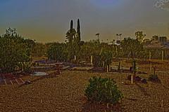 Sun Shower Over Sun City West (oybay) Tags: sunshower sun shower monsoon suncitywest arizona city west landscape backyard nikon cactus raindrops hardtosee amazing capture
