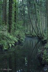 Wonderland (shin4433) Tags: green trees refraction nikon d500