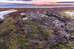 Lindisfarne Sunrise (Claire Willans) Tags: landscape england beach uk water seascape sunset clouds northumberland coast algae holyisland lindisfarne rocks rockpools