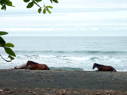 Horses lounging on Caribbean beach (ashabot) Tags: costarica centralamerica centroamerica tropics villagelife caribbean caribe horses horse seaside shore