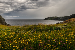 rainy days and mondays (-liyen-) Tags: coast cove twillingate newfoundland clouds rain weather storm wildflowers water ocean canada fujixt1 challengeyouwinner