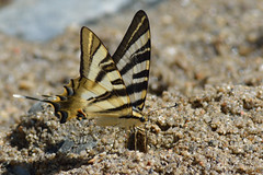 Poo da Broca, Serra da Estrela (Carlos Pinto 73) Tags: serra estrela poo broca butterfly