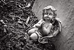 Angels Fall (drei88) Tags: life death cherub angel cemetery fairviewcemetery hiramohio forlorn
