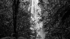 Shine Waterfalls (58m), Hawkes Bay, NZ - 7/8/16 (Grumpy Eye) Tags: nikon d7000 shine waterfall nikkor 24mm 14 falls black white hawkes bay