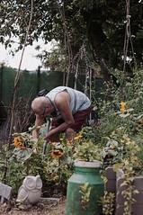 Gardening Leave (lewist584) Tags: sonynex5r sony nex5r emount m42mount cosinon50mmf17 cosina portrait luxembourg lewist584 lieler ardennes garden grandpa sunflowers digging gardening gimp gmic polaroid690 dro
