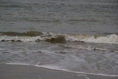 IMG_1067 (EadaoinFlynn) Tags: curracloe beach sea ireland irishsea wexford