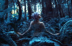 Blue Calx (Kindra Nikole) Tags: blue calx aphex twin kindra nikole ferns ferny fern forest forested glade glen grove woods whisper cyan teal glow labyrinth labyrinthine maze white hair silver maiden elvish