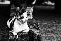 04 sguardi di gatto (lurick.01) Tags: cat eyes gatto pozzuoli street
