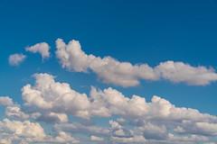 DSC00212-2 (UmitCukurel) Tags: sonyalpha sony a7rii istanbul turkey turkiye turquia estambul bosphorus seagull gaviota bird bogazici vapur building architecture cloud sky bridge mosque tr