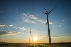 West Texas Morning (4 of 40) (mharbour11) Tags: wildcats elk purple sunrise westtexas texas sky windturbines windmill sun silhouettefire silhouette