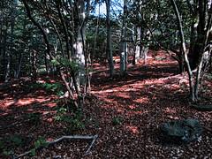 Luci e colori del bosco. (Turm 2) Tags: bosco sottobosco foglie fogliame alberi tronchi legno