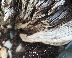 Oh, the webs we weave. (Captured by AMK) Tags: wood stump web webs nature project365