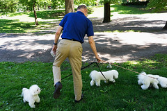 (Monsieur Marchi) Tags: manhattan centralpark newyorkcity man dogs poodles entangled sonya7r trio white walkingthedogs usa