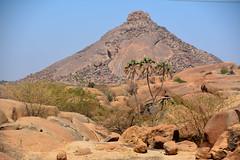 Tesseney /  (Eritrea) - Landscape on Gash River (Danielzolli) Tags:  tesseney tessenei teseney tesenei eritrea  ertra erythre  erythrea  eritra habesha gash barka gashbarka gashsetit landschaft pejsaz paysage landscape paisaje   palm palme