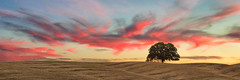 A Single Tree (boingyman.) Tags: california sunset tree clouds canon landscape skies single scape lonetree 35l dunniganhills t2i boingyman