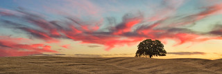 california sunset tree clouds canon landscape skies single scape lonetree 35l dunniganhills t2i boingyman