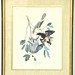 "14. 1963 Audubon Style Lithograph by Ray Harm - ""Baltimore Oriole"""