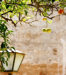 framing... (..Ania.) Tags: light bird wall branches morocco frame oranges orangetree rabat andalusiangardens