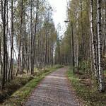 Cycling through birch trees thumbnail