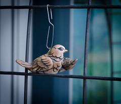 Toy Bird's and paper clip's. (Omygodtom) Tags: autumn macro bird fence paper season toy dof bokeh clip hanging setting tamron