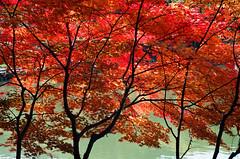Hida no Sato  (mlisowsk) Tags: autumn trees red tree green fall film nature water japan 35mm iso100 pond asia village kodak outdoor availablelight  takayama gifu  hidanosato leicar7 kodakektar100  leicavarioelmarr2870