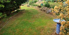 The Long Terrace (di off the wallaby) Tags: tasmania derby stclements inmygarden blinkagain